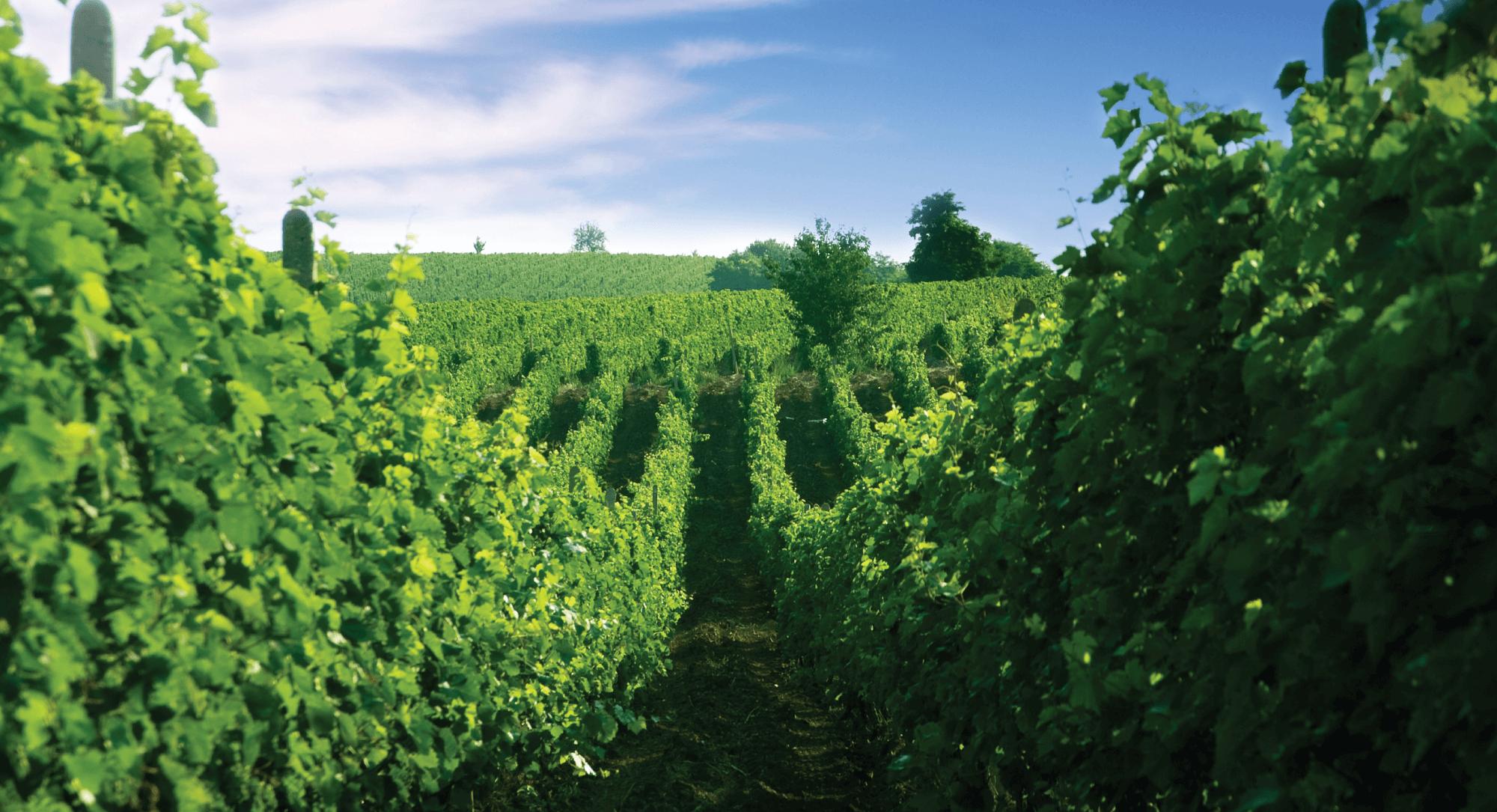 wijngaarden stobi